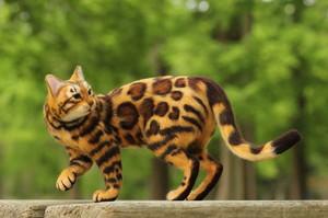 ベンガル 羊毛フェルト 猫 ねこ Cat Doll