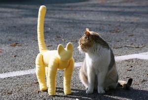 デジカメ 人物撮影 ととら totora 熊木富男 猫 黄色いネコ 野良猫 保護猫
