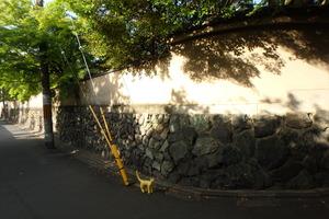 京都 電柱 小道 ととら totora 熊木富男 猫 木陰 黄色いネコ