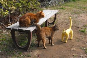 熊木富男 ととら totora 茶トラ 野良猫 保護猫 表参道 黄色いネコ