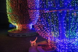 ととら 熊木富男 写真家 イルミネーション 旅 散歩 黄色い猫 ねこ 夜景 大井競馬場 イメージ