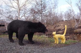 クマと遭遇