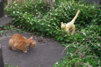 どくだみ草とネコ