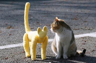 駐車場のネコ