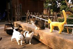 ととら 川越の猫たち 幸せの黄色い猫 イエローキャット yellowcat