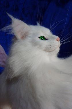 桜花 Ohka RONDON リアル猫羊毛フェルト