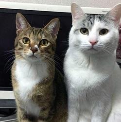 猫顔ブローチオーダー