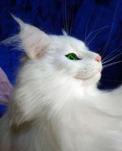 桜花 Ohka LONDON リアル猫羊毛フェルト mimettoのサムネイル画像
