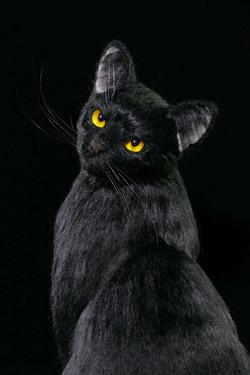 ノワール 漆黒 黒猫 ミメット 熊木早苗 羊毛フェルト 教室 体験教室