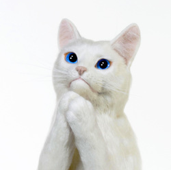 祈り 羊毛フェルト 熊木早苗 白猫 お願い猫 アート