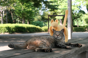野良猫 cat ととら 公園 茶トラ 黄色い猫 癒しのサムネイル画像
