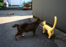 猫 ハチワレ 谷中 黄色い猫 癒しDVD 谷根千 散歩