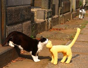 猫 ハチワレ 谷中 黄色い猫 癒しDVD ととら