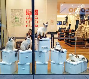熊木早苗 羊毛フェルト うちのこそっくり 吉祥寺 猫人形 ねこ ユニクロ スコティシュフォールド スノーシュウ シャムネコ ラグドール
