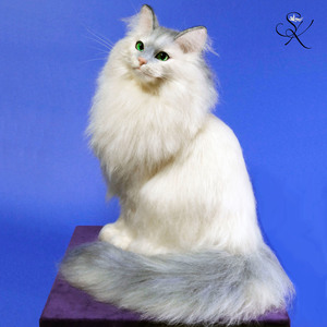 シシィ Elisabeth Sisi 羊毛フェルト 猫 白猫 熊木早苗 エリザベート オーストリア皇后