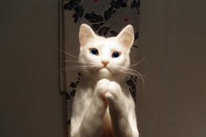 3.11 東日本大震災 白猫 祈り 羊毛フェルト 熊木早苗 桜宵一刻 桜