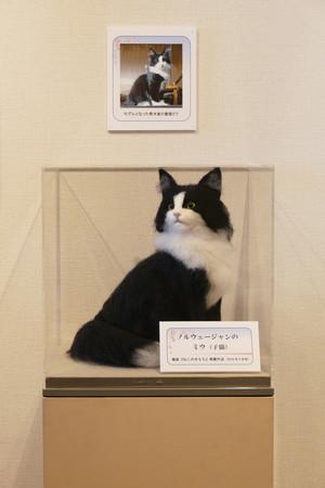 桜宵一刻 個展 熊木早苗 ノルウエージャンフォレストキャット 白黒 はちわれ 猫 羊毛フェルト