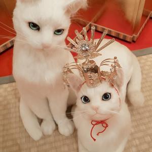 春宵一刻 熊木早苗 個展 羊毛フェルト 猫 白猫 教室 源氏 ひな祭り